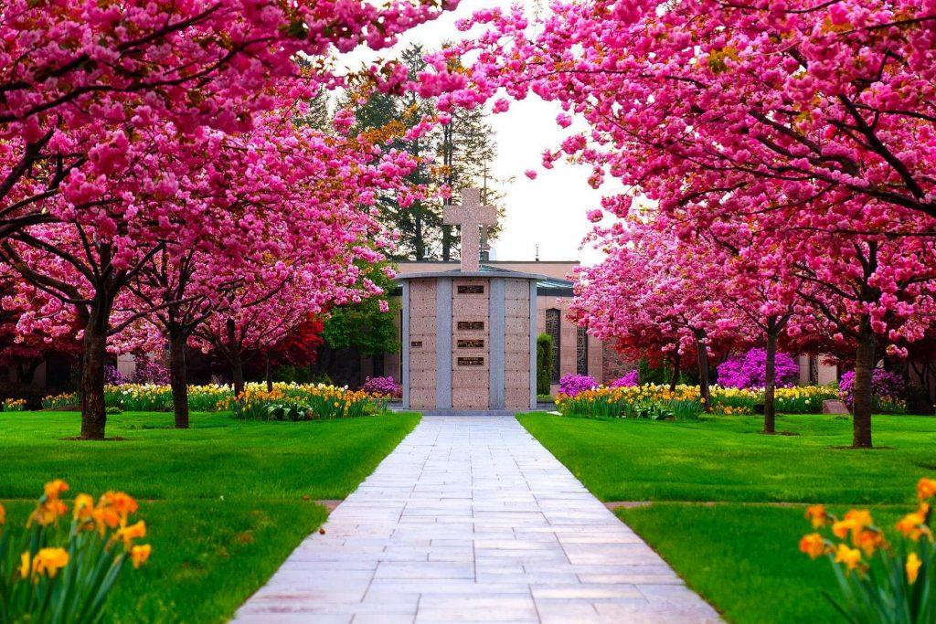 Columbarium with pink trees