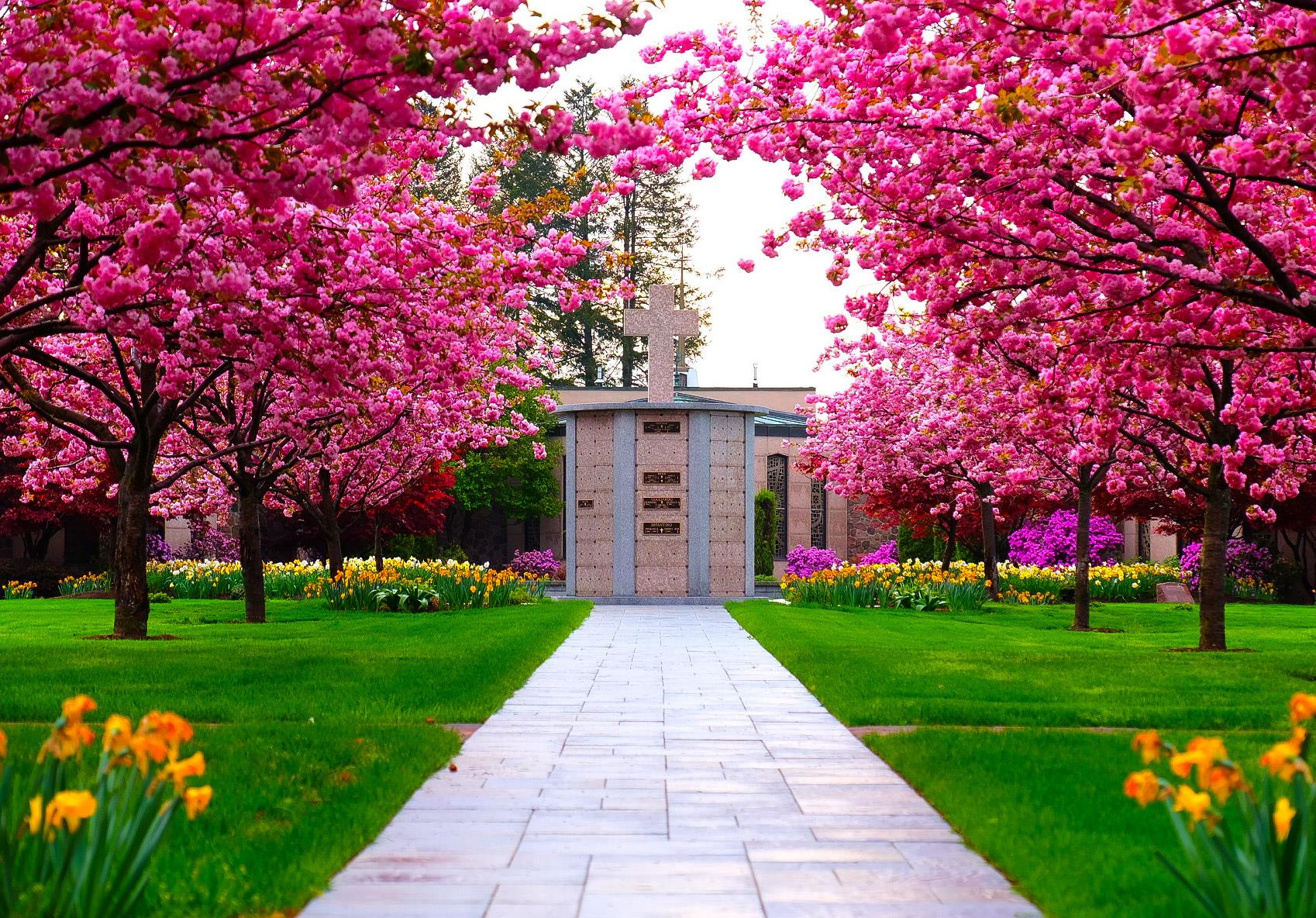 Photo of pink trees in spring