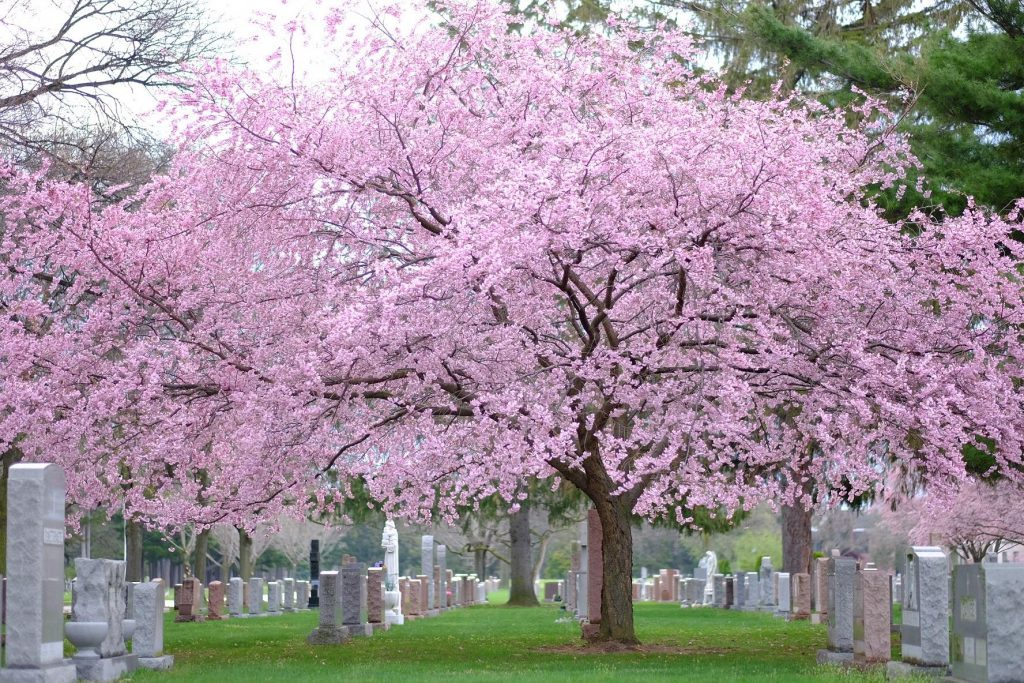 garden sections at holy sepulchre cemetery